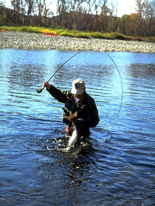Atlantic salmon fishing miramichi atlantic salmon fly fishing for Atlantic salmon fishing